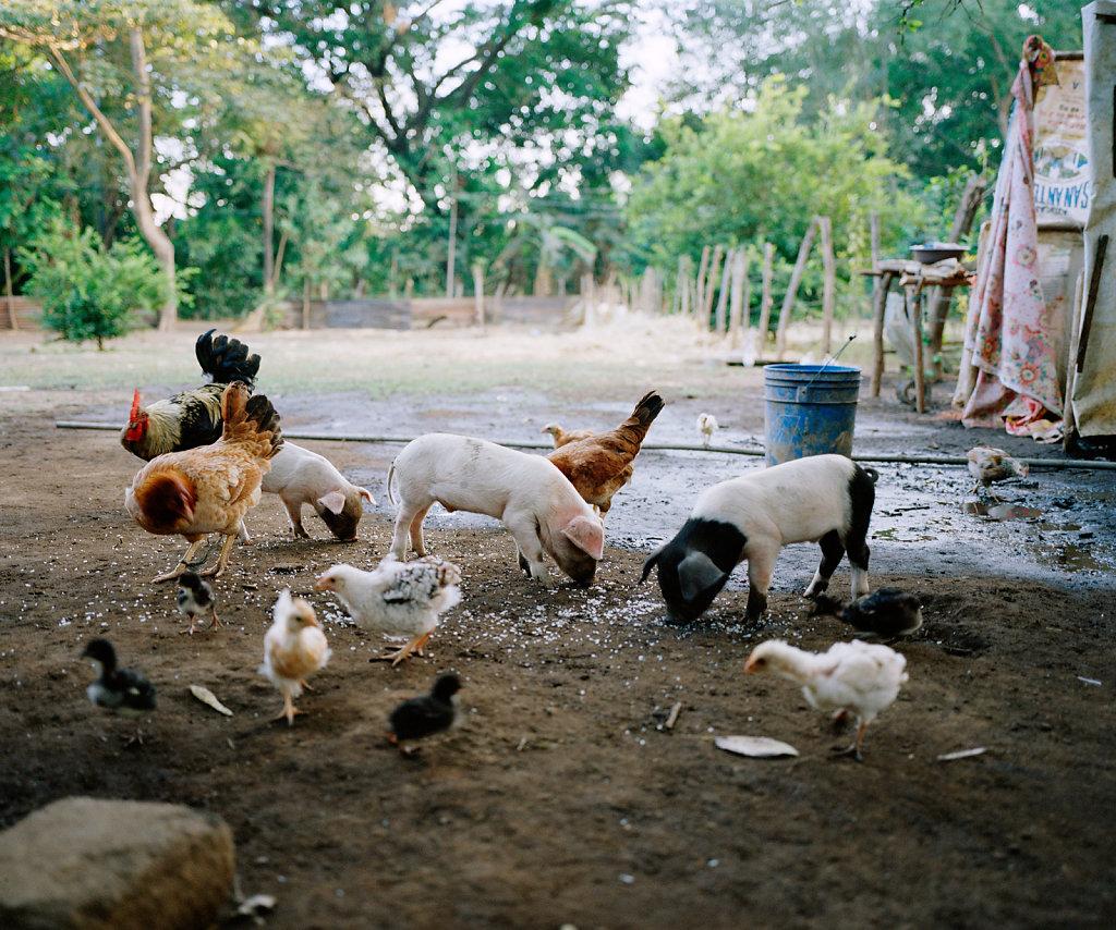 La-isla-de-las-viudas-nicaragua-06.jpg