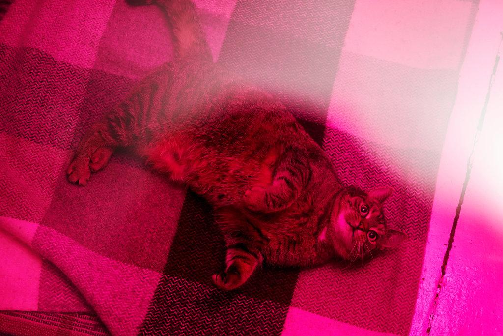 queer-witch-cat-7.jpg